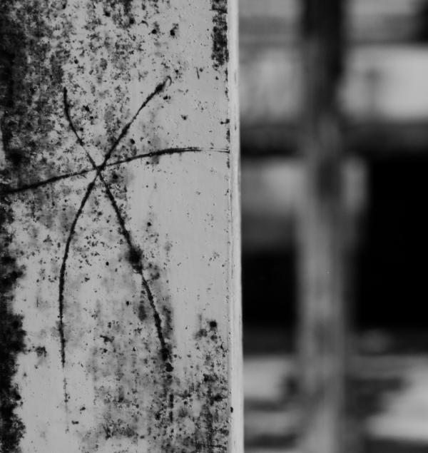 X z falką